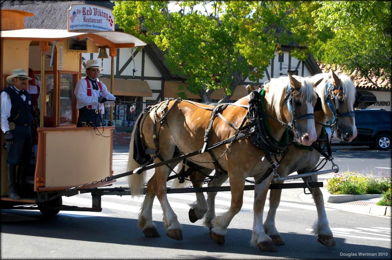 Clydesdales In Solvang