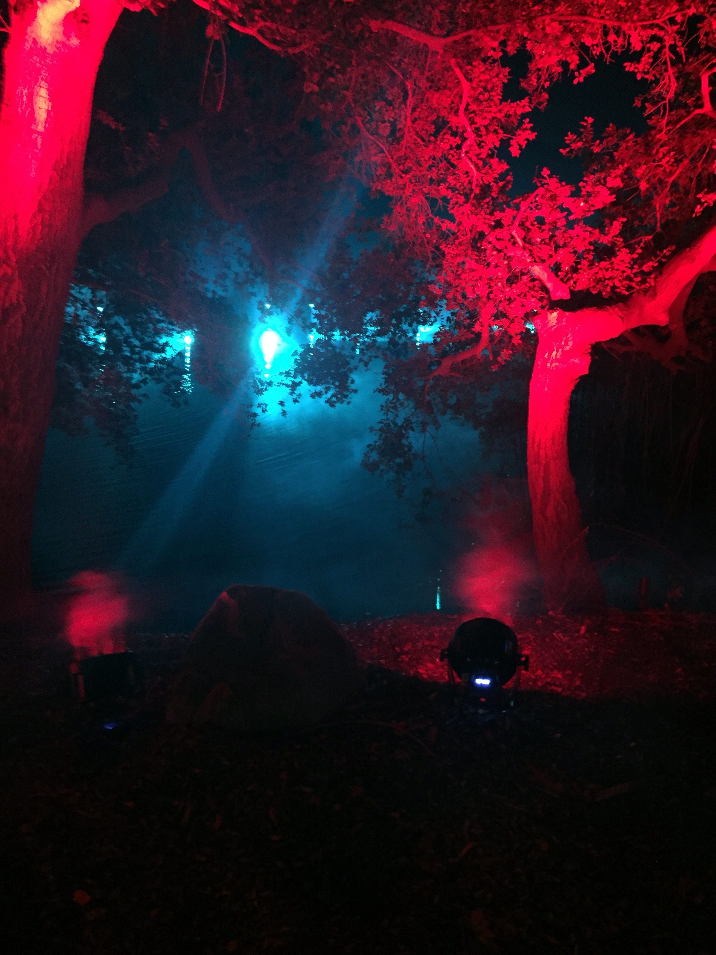 Enchanted forest of light debuts at descanso gardens - Descanso gardens enchanted forest of light ...