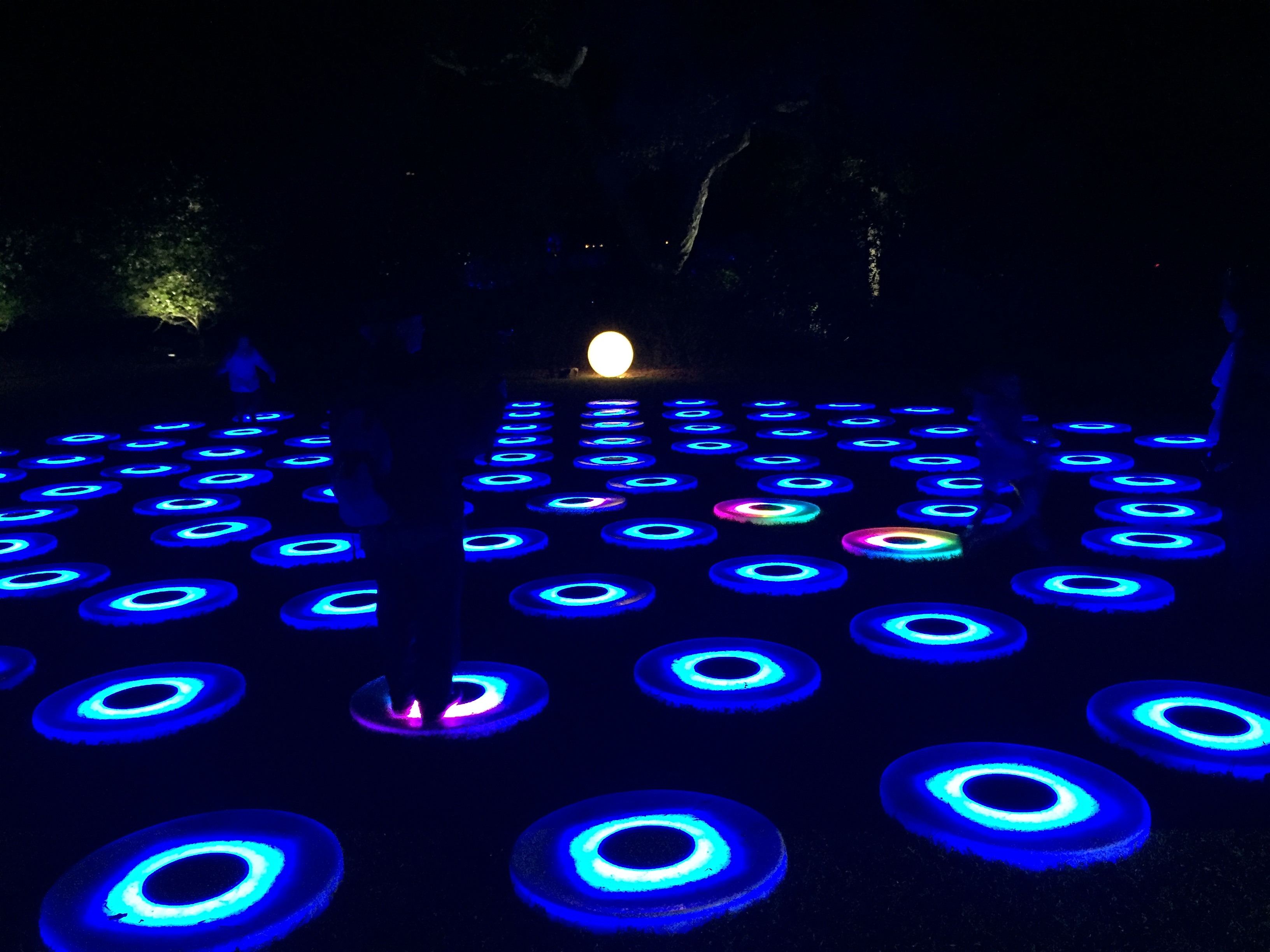 Enchanted Forest Of Light Debuts At Descanso Gardens Pasadena Travel By Entree